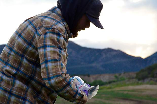 Riley Reed, an Colorado State University student and Colorado Natural Heritage Program intern, wrangles a deer mouse into position after the group captured the tiny rodent in one of 50 small traps set the night before.