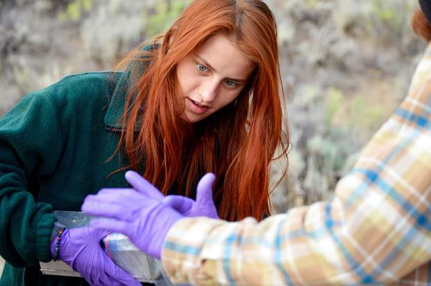 Holding a trap that was set the night before, Colorado State University senior Lauren Hughes receives instructions on how to wrangle a captured mouse without getting bitten and without harming the animal.