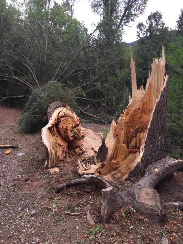 Trees up to 70 feet tall fell during a wind storm at Elk Creek Campground on Monday night.