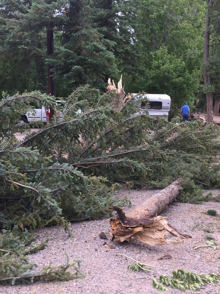 Though not every camper stayed the night, everybody felt lucky to have been uninjured as massive trees fell around them.
