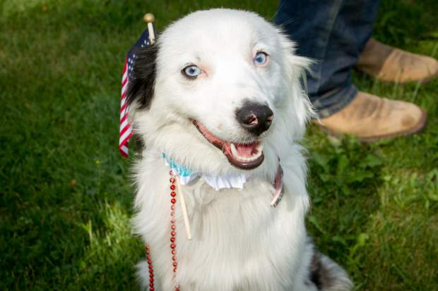 Macey the border collie representing the Red, White, and Blue during the Silt Heydays Parade last year.