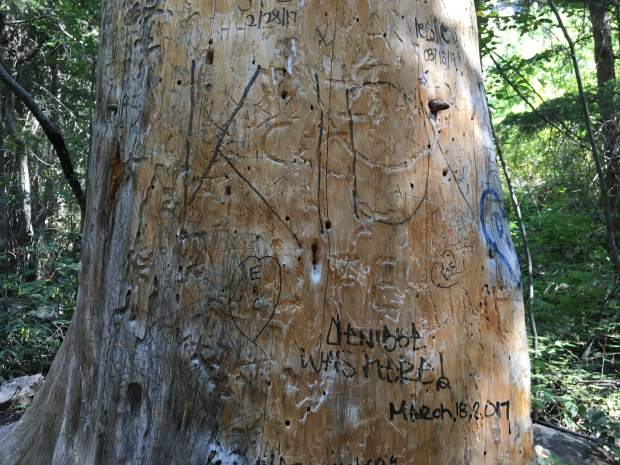 A vandalized tree found about halfway up the trail to Hanging Lake.