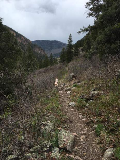 Kiva looks out over the canyon on the Jess Weaver Trail.