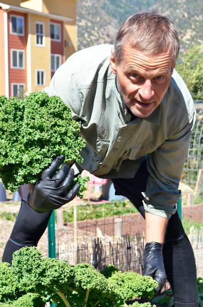 Paul Jankauskas, going on five years of cultivating greens at the community garden, harvests a crisp, fistful of kale Tuesday afternoon.