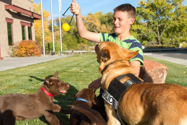 Twelve-year-old Carter Fulk hangs out with Rifle Police canine Tulo and the two new puppies Jax and Makai at the Rifle Police Department on Wednesday afternoon.