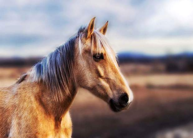 ? where the real beauty lies essay Why you should never say: 'beauty lies in the eye of the beholder'  to be the point of the essay is a telling omission  painting of a horse might be more .