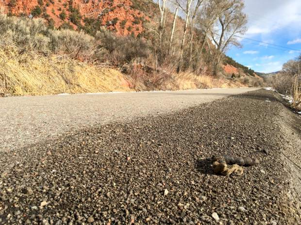 Coyote scat found on the Rio Grande Trail near the Riverview School south of Glenwood Springs.