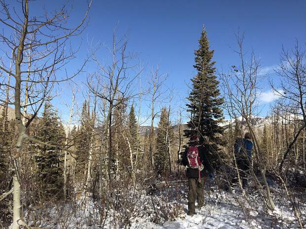 Beautiful scenes abound when Christmas tree hunting in Colorado forests.