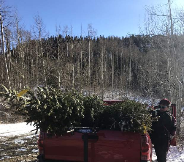Caitlin Kennett secures four Christmas trees in her truck bed. The Forest Service website indicates this permitted tree cutting is part of managing the forests.