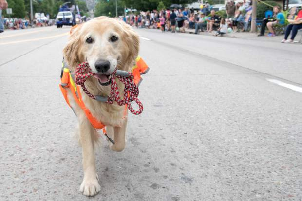 A happy pooch walks themself down Grand Avenue during the 2018 Strawberry Days Parade on Saturday morning.