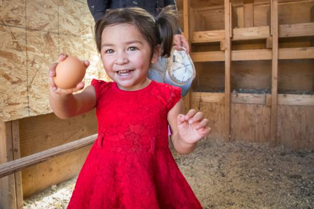 One-year-old Yoselynne Garcia helps gather eggs from the hen house on the Cedar Ridge Ranch in Missouri Heights.