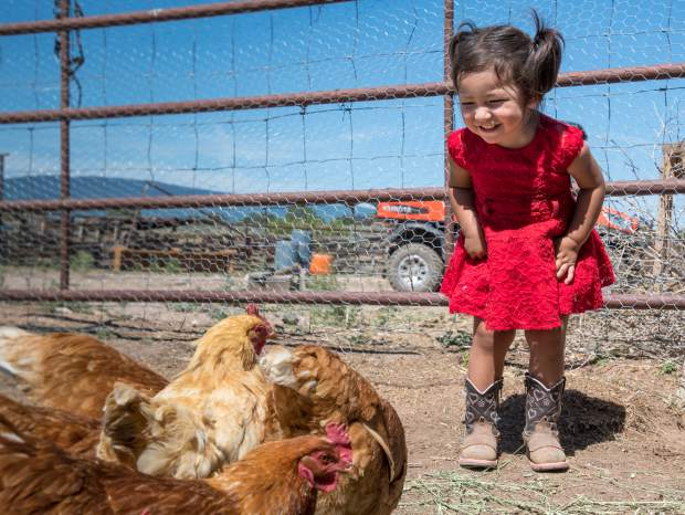 One-year-old Yoselynne Garcia reacts to the chickens at the Cedar Ridge Ranch in Missouri Heights.