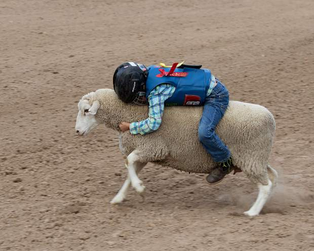 An unidentified mutton buster in the pre-rodeo event Saturday evening at Grand Valley Days in Parachute.