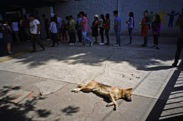 A dog sleeps in the sun as people wait to vote during general elections in Santiago Tulyehualco, Mexico City, Sunday, July 1, 2018. Sunday's elections for posts at every level of government are Mexico's largest ever and have become a referendum on corruption, graft and other tricks used to divert taxpayer money to officials' pockets and empty those of the country's poor. (AP Photo/Ramon Espinosa)