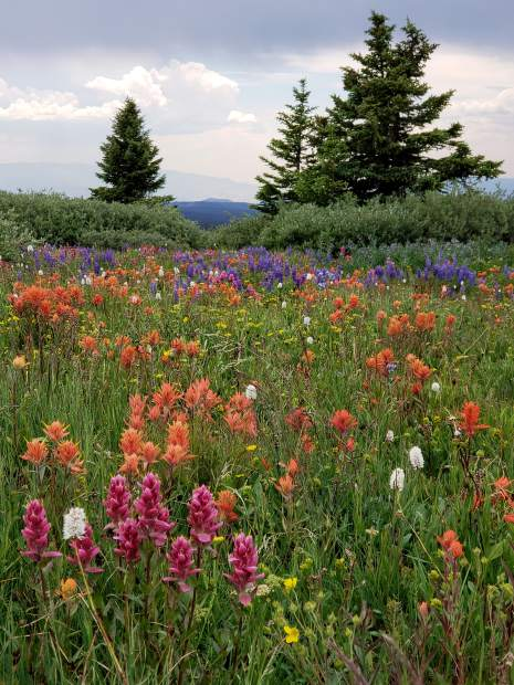 The summer wildflowers are in full bloom above 11,000 feet elevation in the Flat Tops north of Glenwood Springs. Mandy and Scott Gaulding took an RZR ride over the weekend, and captured this image on Blair Ridge, located on Clinetop Road (Forest Road 609).