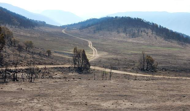 Fire swept through the 2,800 acres of the Basalt State Wildlife Area July 3 and 4 but patches of green grass have already sprouted.