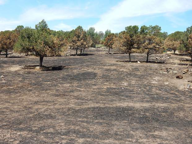 The spacing and removal of lower limbs on pinion and juniper trees in the Vista Hi neighborhood of Missouri Heights likely slowed the spread of the Lake Christine Fire on July 4-5.