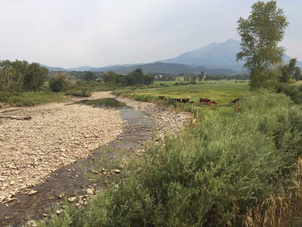 Cows graze near the Crystal River, just upstream from the fish hatchery. The Crystal just downstream was running at around 8 cfs on Friday, spurring action by state officials.