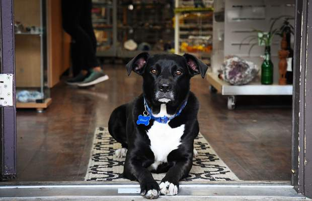 Good boy Diesel sits patiently in the doorway and watches the world go by at the Crystal Tuning shop at 819 Grand Ave. in downtown Glenwood Springs.
