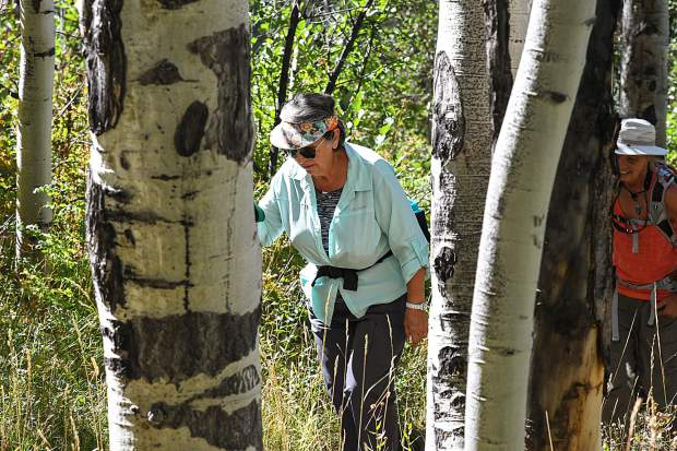 The Wednesday Wanderers walk through the aspen trees during a hike near Hunter Creek in Aspen on Aug. 29.