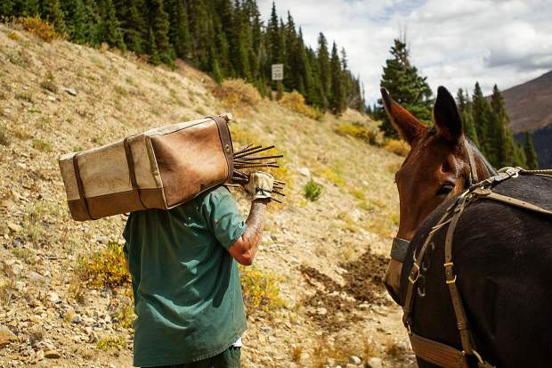 Pack String Of Mules Horses And Prison Inmates Help Clean Up Old