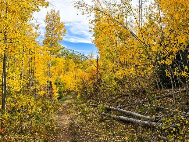 Golden yellow leaves line the Babbish Gulch trail near Four Mile Park on a mild but windy Sunday afternoon. The peak leaf-peeping week in and around Glenwood Springs appeared to be this past week, as wind and rain are expected to move into the area for much of the upcoming week.