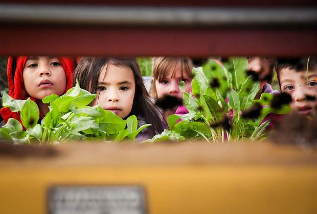 Sopris Elementary School student Dionne Rodriguez, front, and other students in her first-grade class watch in awe as a machine fills planters with soil during their farm tour at Osage Gardens outside New Castle on Wednesday.