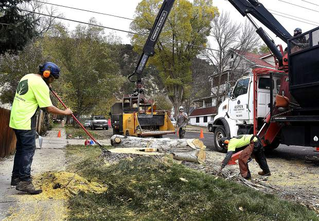 A crew from Aspen Tree Service clean up the remains of one of two Silver Poplar trees it removed near the intersection of 10th Street and Blake Avenue Thursday. The trees which were in rough shape and needed to be removed, were estimated at roughly 60-70 years old.