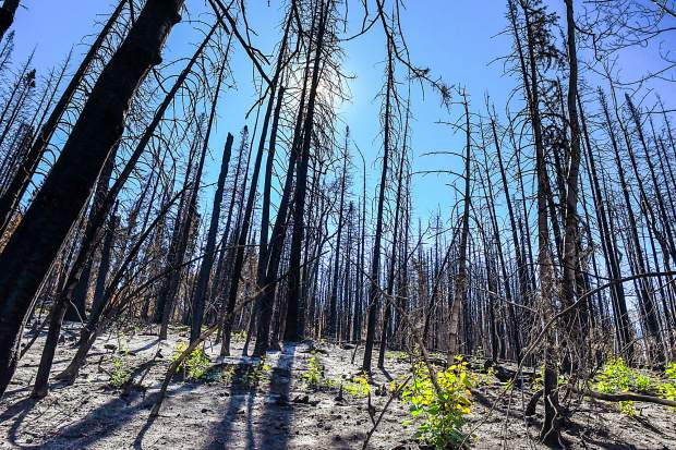 The Lake Christine Fire broke out on July 3 and burned more than 12,500 acres north of Basalt, and cost over $18.5 million to fight.