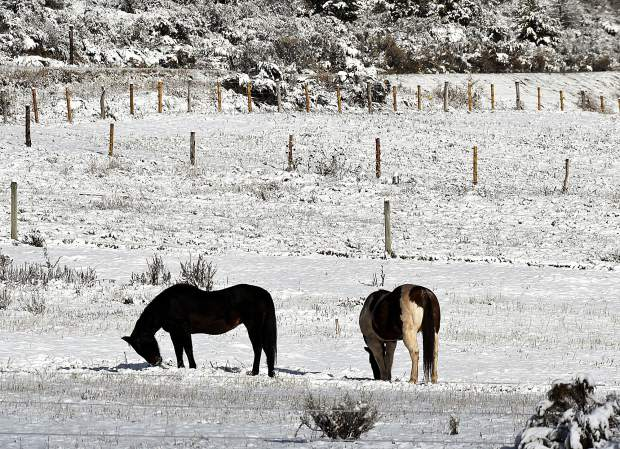 A pair of horses forage through the light dusting of snow for a morning snack south of Glenwood Springs near Hardwick Bridge Road Monday.