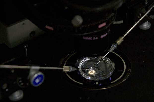 In this Oct. 9, 2018 photo, an embryo receives a small dose of Cas9 protein and PCSK9 sgRNA in a sperm injection microscope in a laboratory in Shenzhen in southern China's Guangdong province. Chinese scientist He Jiankui claims he helped make world's first genetically edited babies: twin girls whose DNA he said he altered. He revealed it Monday, Nov. 26, in Hong Kong to one of the organizers of an international conference on gene editing. (AP Photo/Mark Schiefelbein)
