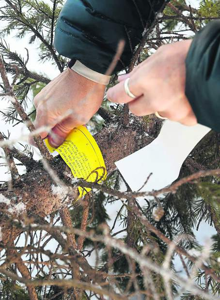 Kristin Clifford tags their tree with the permit they recieved from the White River National Forest.