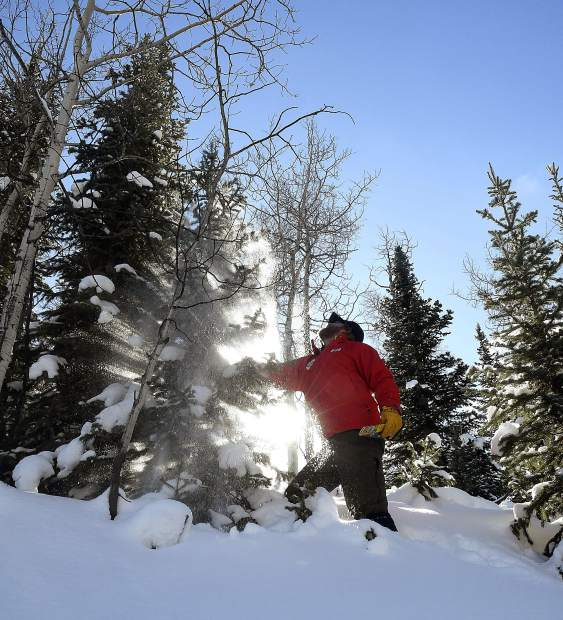 Damon Clifford shakes the snow off a tree as he and his family search for their Christmas tree Sunday near Sunlight Mountain.