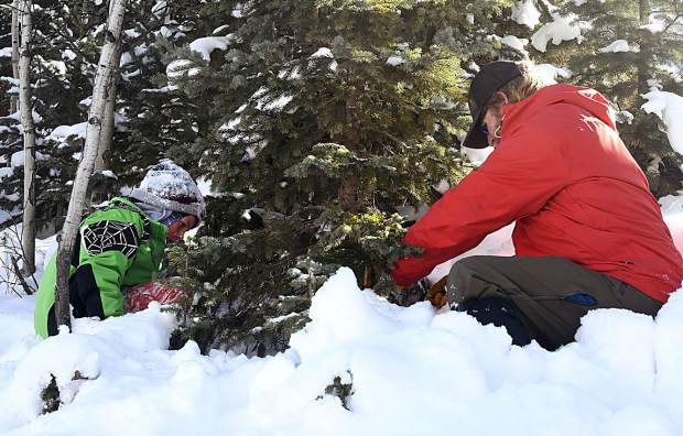 Jack Clifford watches as his dad Damon cuts down the famlies tree for this Christmas. Jack a fourth-grader at Glenwood Springs Elementary, was one of the many that took advantage of White RIver National Forests free christmas tree permits for fourth graders.