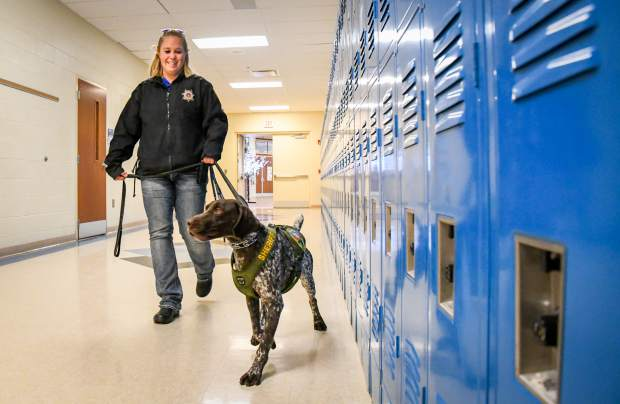 Garfield County Sheriff Officer Trisha Worley and her working K9 Bull walk the halls at Coal Ridge High School in November. Bull is trained in Narcotics and will be full time at the school.