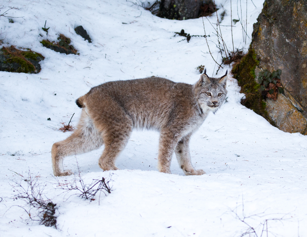 Colorado Parks and Wildlife asks taxpayers to consider donating to wildlife fund