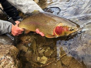 On the Fly column: Time to get used to dry fly fishing