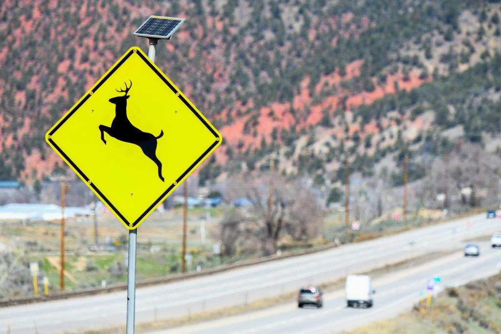71bdfcf59adb Beware of deer: Roadkill numbers typically spike in spring in Garfield  County
