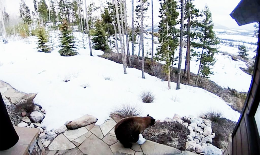 Watch: Bear gets euthanized in Grand County after conflict with homeowner