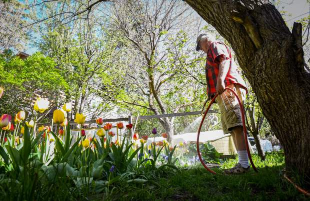 Hurst has been developing his tulip beds for the past 35 years in the back yard of his grandmother's house, which he now owns.