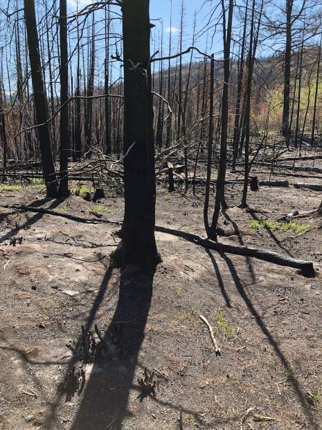 Charred tree trunks dominate some parts of the landscape of Basalt Mountain. Roaring Fork Valley residents have been checking out the area to see the damage from last year's Lake Christine Fire.