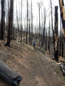 Trail crew clears scores of burned trees on two popular trails on Basalt Mountain