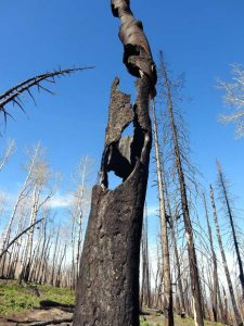 Planning advances on 33,000-acre forest health project outside of Glenwood Springs