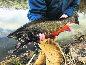 On the Fly column: Give fly fishing a try
