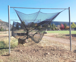 deer tangled in nets
