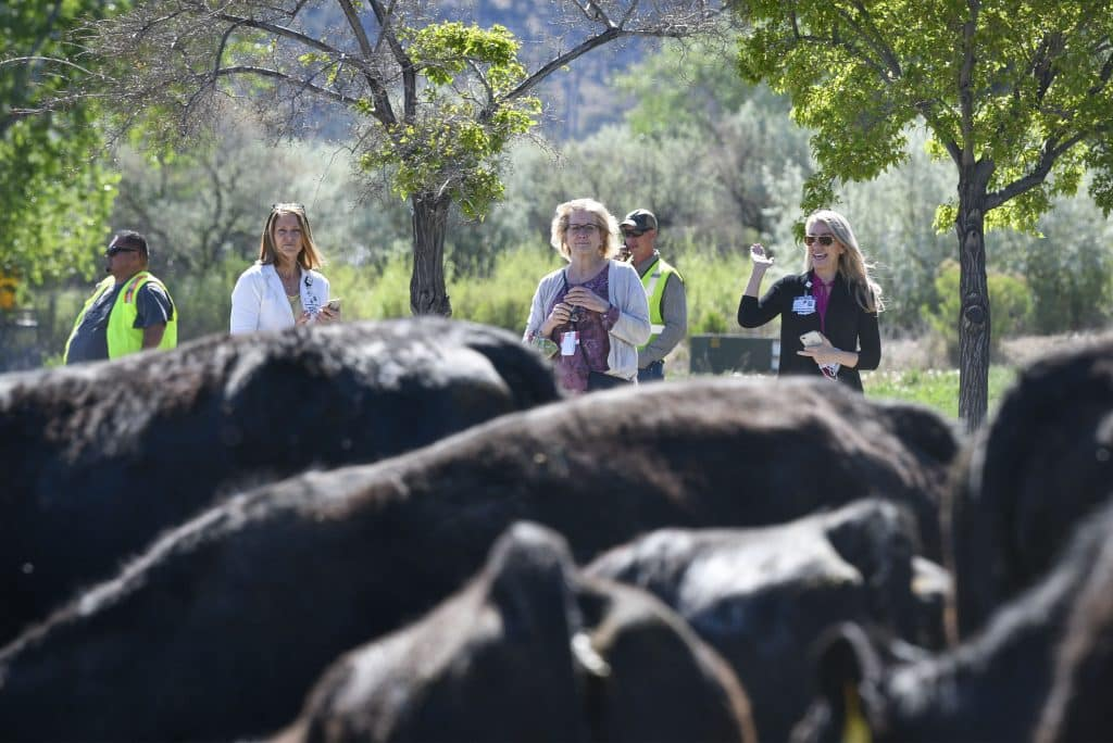Members of the staff from Grand River Health come out for a closer look as the herd travels in front of the hospital.