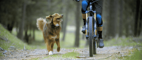 Paws and Wheels.'