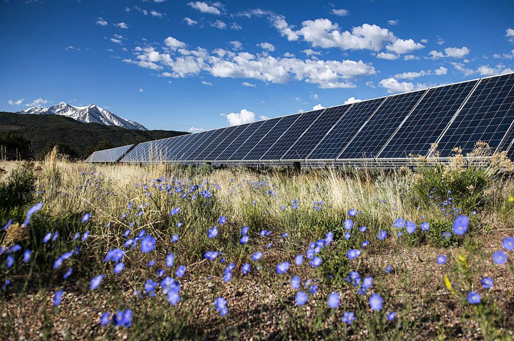 Flowers and vegetation bloom solar panels in Carbondale with a view of Mt. Sopris on Friday, May 29, 2020. (Kelsey Brunner/The Aspen Times)