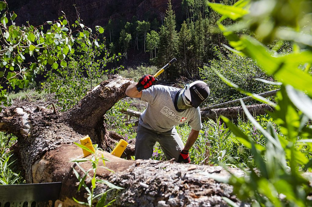 Jason Kongsberg uses the blunt end of an axe to hammer wedges into a tree off of East Snowmass Trail while working for Colorado Avalanche Information Center on Tuesday, July 7, 2020. (Kelsey Brunner/The Aspen Times)