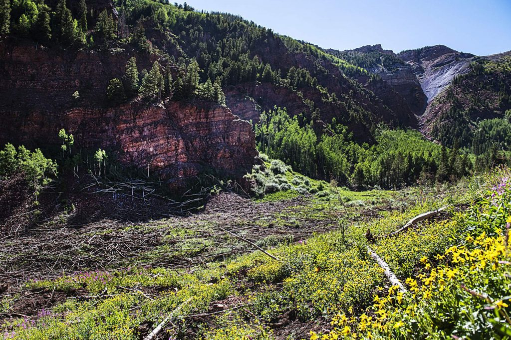 Trees from an avalanche pile up under a cliffside off of East Snowmass Trail on Tuesday, July 7, 2020. (Kelsey Brunner/The Aspen Times)